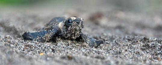 Turtle Protection Program